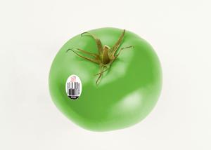 Green Beefsteak Tomatoes