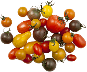 Chef Collection Tomatoes