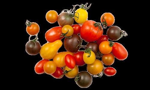 Artisan Series (Specialties) Tomatoes